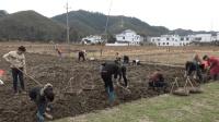 这种土货在农村非常受欢迎, 大家都喜欢自己去挖!