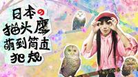 日本猫头鹰森林的萌神可爱到炸裂, 从此不想再吸猫!