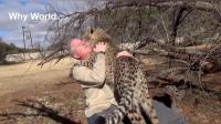 人与动物之间的真情拥抱