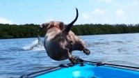 30个好笑又可爱的狗狗视频, 绝对治愈, 看完你会笑的!