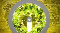 国外发明摩天轮种植园, 一次能种80种蔬菜, 想吃什么种什么