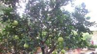 这些水果吃完不要扔, 一周能发芽, 一个月后变盆栽, 太棒了!