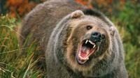打熊不成, 反被熊杀