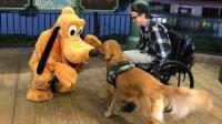 【嗅君葩闻】美国金毛犬迪士尼偶遇最喜爱卡通人物表情欣喜若狂