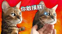 【萌星人de那些破事】别被骗! 这才是猫的真实面目!