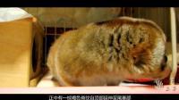 这四种整个世界上都非常稀有的动物 你都见过了吗?