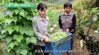 """在农村这5种""""有毒""""的农产品, 你也经常在吃吗?"""