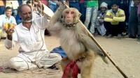 印度开挂哥教你怎么耍猴子