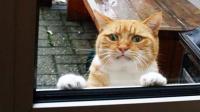 猫咪被骂后离家出走于是窗外就出现了这一幕