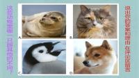 考验大家的逻辑思维和智商, 上面的四种动物哪一只和其他的不一样