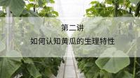 如何认知黄瓜的生理特性