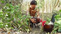 农村小伙树林里抓野鸡, 一个人一只野公鸡, 大火烤了啃着吃!