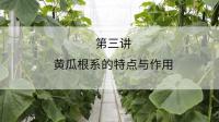 黄瓜根系的特点与作用