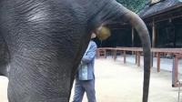 大象拉屎现场 你们见过吗