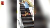 老鼠乘电梯  路人上蹿下跳