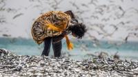 """日本再次出现""""异象"""", 40公里海岸全是沙丁鱼, 这寓意着什么?"""