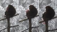 惹不起!猴子抢游客钱包掏钞票散下悬崖