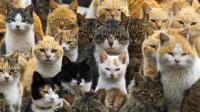 中华田园猫占领日本11大岛屿, 当地民众纷纷屈服愿世代供奉!
