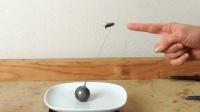 给苍蝇绑细绳起飞后能带多少重量? 网友: 想捉一群苍蝇飞去上班!