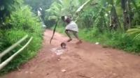 草丛中跑出一条眼镜蛇, 把黑人小伙吓得屁滚尿流