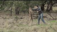 搞笑: 网友打猎遇到袋鼠在欺负自己的傻狗, 二话不说就上去揍袋鼠