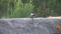 鬣狗群体攻击简直无敌这只鹿惨了