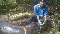 活捉最大的蟒蛇, 长达14.85米, 100年来最长的蛇!