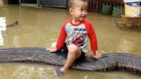 家里发大水, 6岁男孩骑蟒蛇逃跑, 这坐骑也是无敌了!