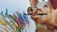 一只猪成了画家, 它的画卖出10万元, 还开了画展