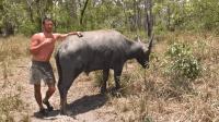 徒手猎汉这次抓了个大家伙, 户外徒手抓野生大水牛