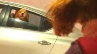 隧道里塞车, 车上的泰迪太无聊, 居然和对面的金毛吵了起来