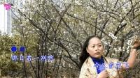 一首伤感歌《 梅花泪 》唱遍了半个陕西省