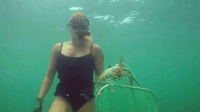 和女朋友一起潜入海底抓澳龙, 一只龙虾够好几个人吃