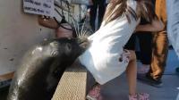 中国女孩去摸海豹, 雄海豹接下来做的动作却把周围人都吓坏了!