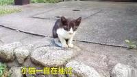双目失明的小流浪猫, 瘦的枯瘦如柴, 大米饭都难得吃上