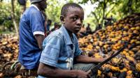 情人节还送巧克力? 每块巧克力背后都沾染着非洲几百万童奴的血泪