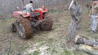 用拖拉机连根拔起树木, 这比挖省力多了