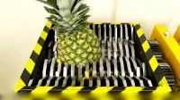 椰子vs粉碎机, 到底谁够硬? 隔着屏幕都能感受到