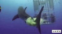 不满人类的围观拍照, 这只鲨鱼使用了最恶毒的攻击方式