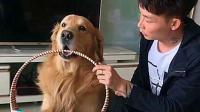 有这样的狗狗还不知足? 帮主人买鸡蛋, 不小心打烂被训! 好委屈!
