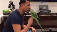 精怪的鹦鹉, 这么会讨主人欢心, 难怪在家里这么受宠, 撒娇小能手啊