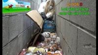 希望之爪: 拯救一窝在垃圾堆里的小奶猫