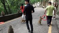 贵州黔灵山公园的猴子不怕人, 还会向游客要吃的