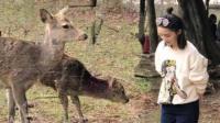 李沁日本喂鹿随性可爱