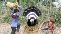 柬埔寨的男孩就是牛, 在野外挖蛇遇见这货, 他们居然毫不畏惧!