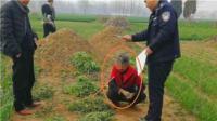 河南农妇种大量罂粟当菜贩卖被刑拘