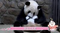 熊猫发起狠来, 连自己都给自己笑濒临灭绝了