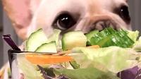 狗狗把青菜当肉吃, 佛系狗子拒绝肉食!