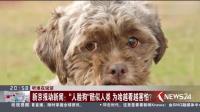 """听谁在说话 新京报动新闻: """"人脸狗""""酷似人类 为啥越看越害怕?"""