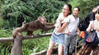 被妈妈逼着去和猴子拍照后…这是被猴王选中的女人